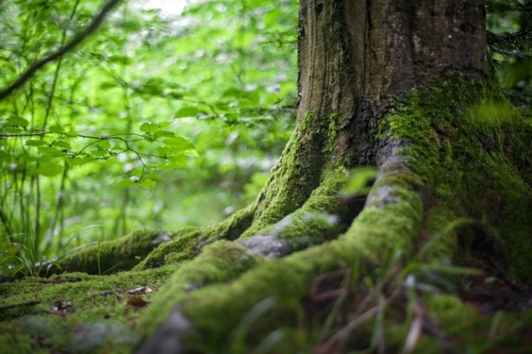USFS protects trees with GIS management plans